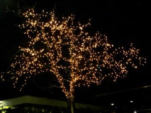 boomverlichting buiten ledverlichting 100 meter 1000 leds 80w 230v